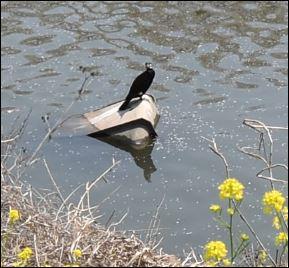川口市 芝川野鳥