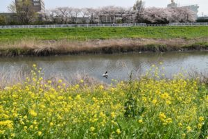 芝川 野鳥